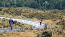 Trilhas e estradas percorrem matas de araucárias