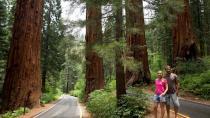 Parque das sequóias gigantes nos Estados Unidos